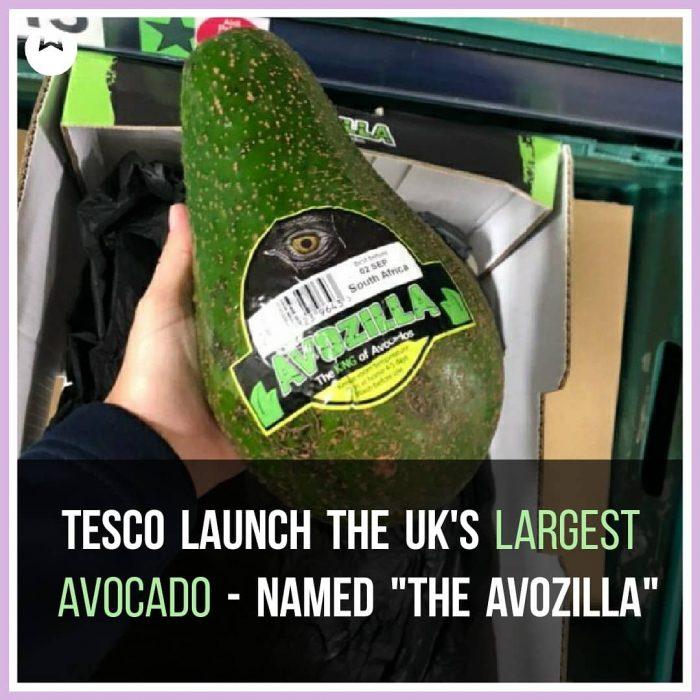 Tesco Launch Largest Avocado at Any UK Supermarket