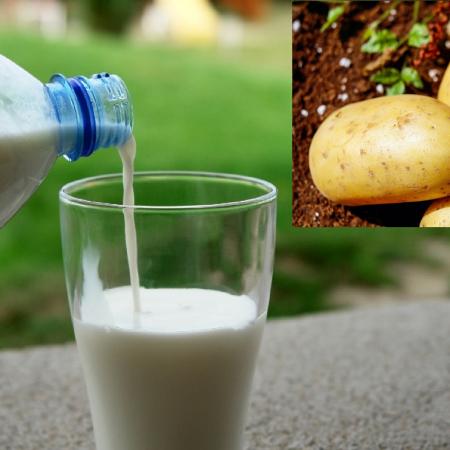 Potato-Based Milk Takes On The UK Market
